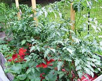 Сад и огород без ядохимикатов