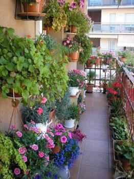 Оформление цветами балконов