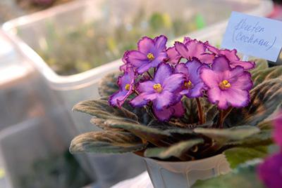 Низкорослые цветы фото и названия
