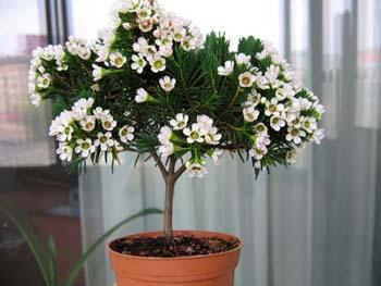 Разместить комнатные растения