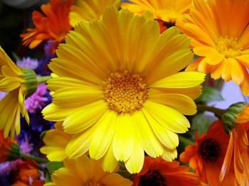 Летние цветы в вашем доме