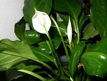 Растения болезни вредители и уход