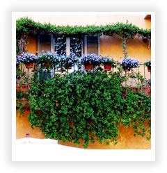 Цветы на балконе растения для балкона
