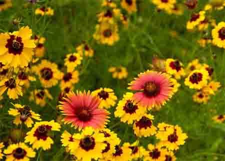 Полевые цветы заслуживают внимания не