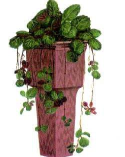 Растения на букву Ф и фото комнатных и садовых растений