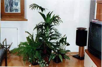 Комнатные растения: вредны ли они для здоровья?