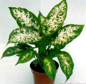 Комнатные растения вредны ли они для
