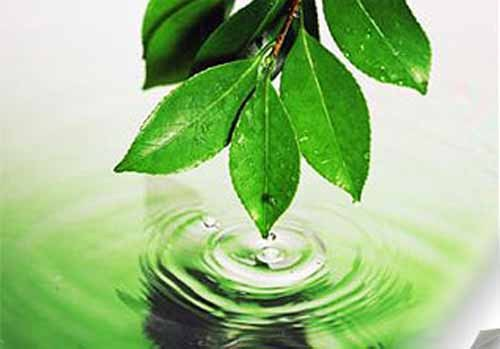 Основные законы экологии