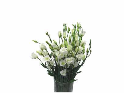 """материалы связанные с  """"заказать цветы на свадьбу срочная доставка мытищи """" ."""