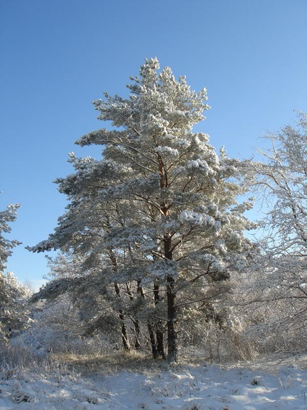 Как растения выживают зимой