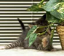 Как отучить кота есть комнатные цветы
