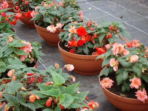 фото комнатных цветов: