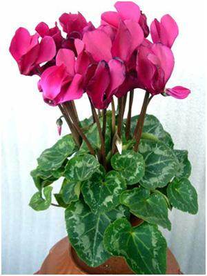 Цветы цветущие фото и название только