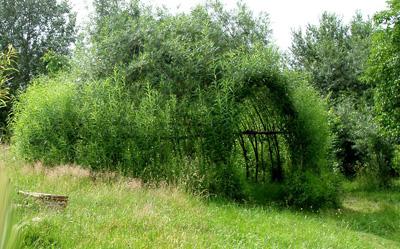 Благоустройство сада с использованием ивы в качестве живого ...