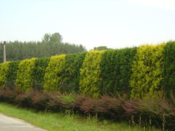 Деревья и кустарники в окружении