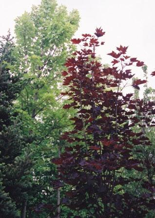 Растения против шума