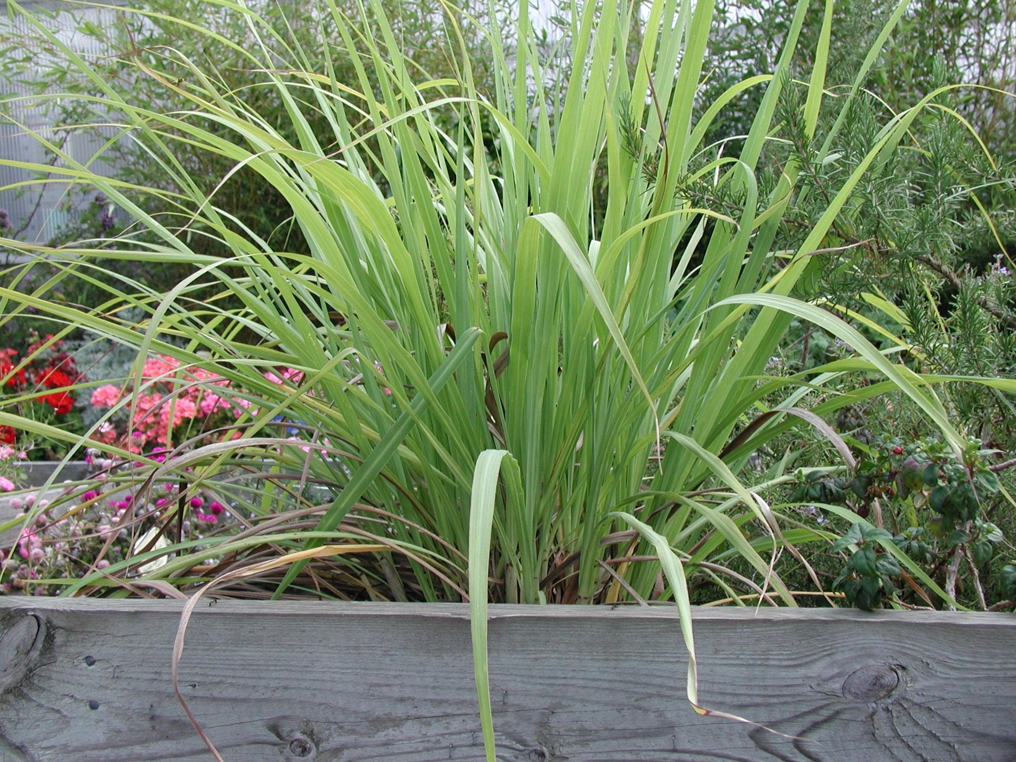 какая трава помогает паразитов в организме
