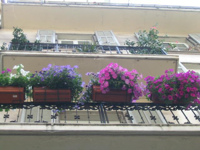 Цветы многолетние цветы мои цветочки