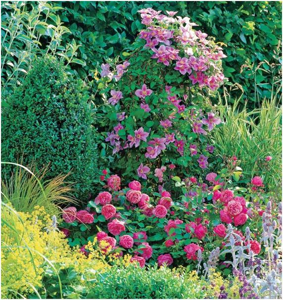 Какие цветы посадить с розами фото