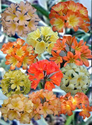 Цветок с длинными острыми листьями 24