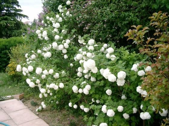 Картинки цветущего сада