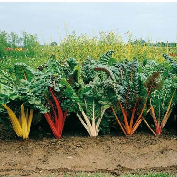 Для сада и огорода своими руками
