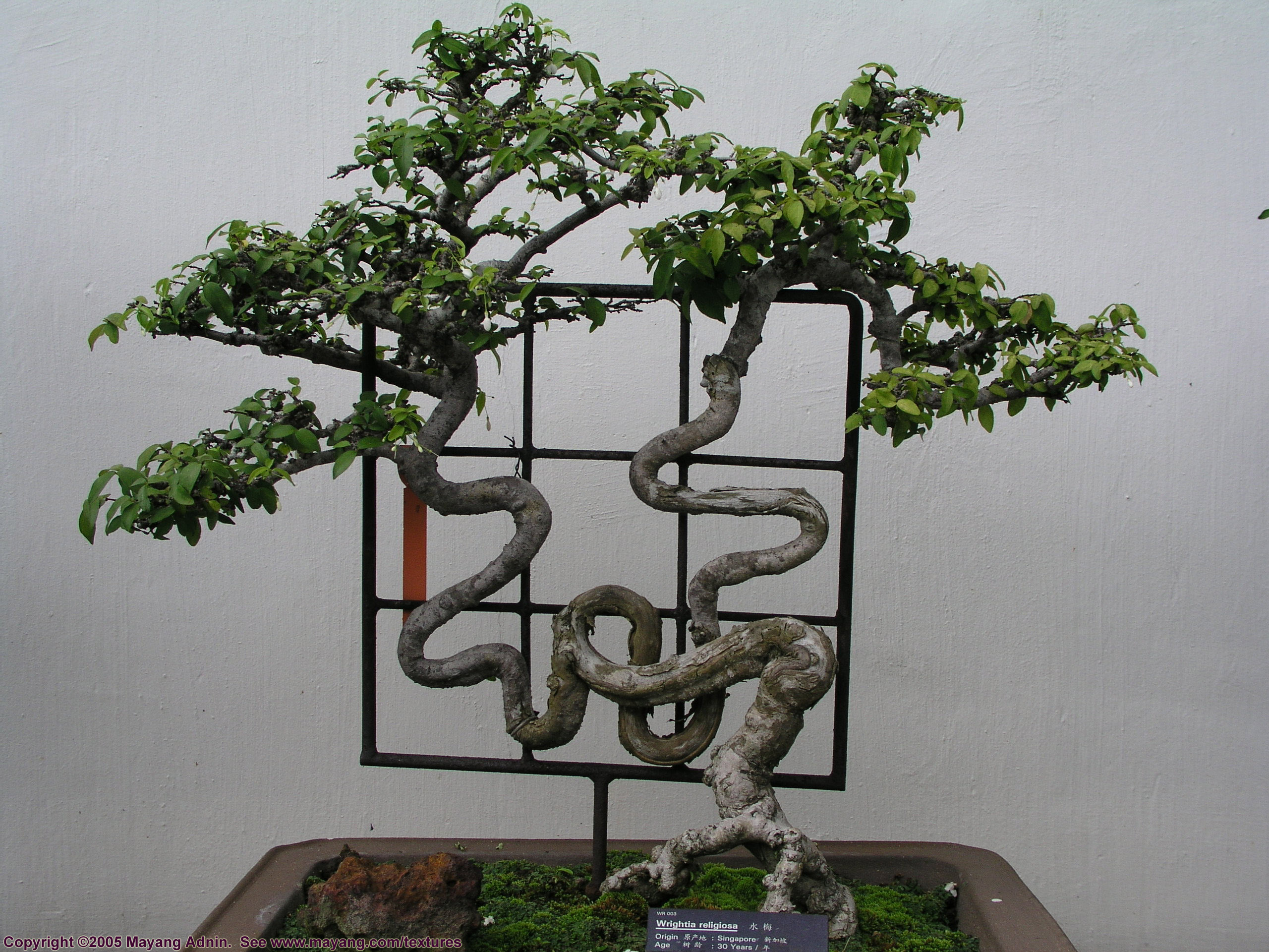Групповая посадка бонсай (лес)