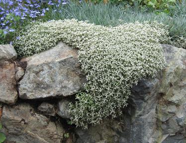 Травянистые растения фото - названия белых трав