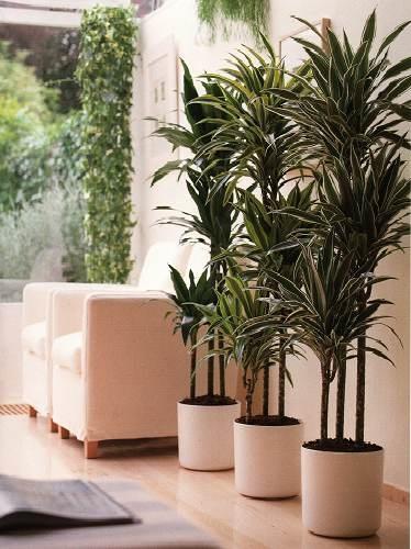 Энергетика домашних растений.