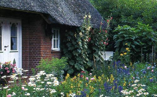 Всевозможных расцветок - особый шарм деревенскою сада. Растения,