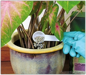 купить удобрение для комнатных растений отзывы