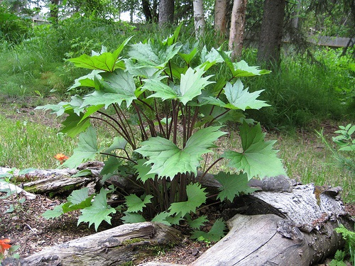 Комнатные растения в картинках