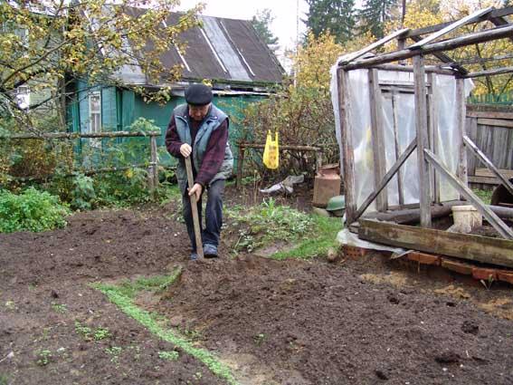 Удобрение почвы осенью. Когда и как применять удобрения? Универсальный портал