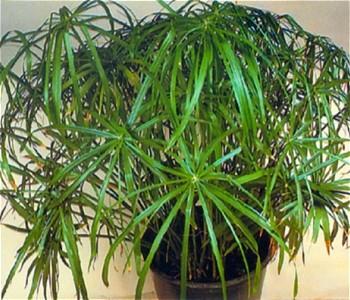 Некоторые растения образуют отростки