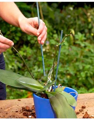 орхидея посадка - Самое интересное в блогах Серхио только лишний раз всколыхнет в нем чувство вины или вызовет...