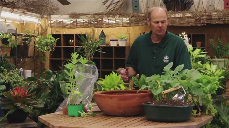 Выращивание зелени на подоконнике в