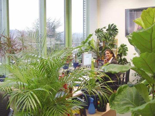 Комнатные растения вредители