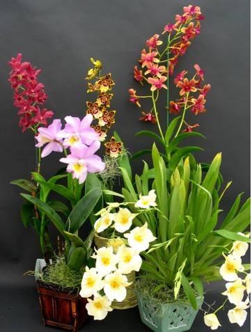 Семена комнатных растений по каталогу