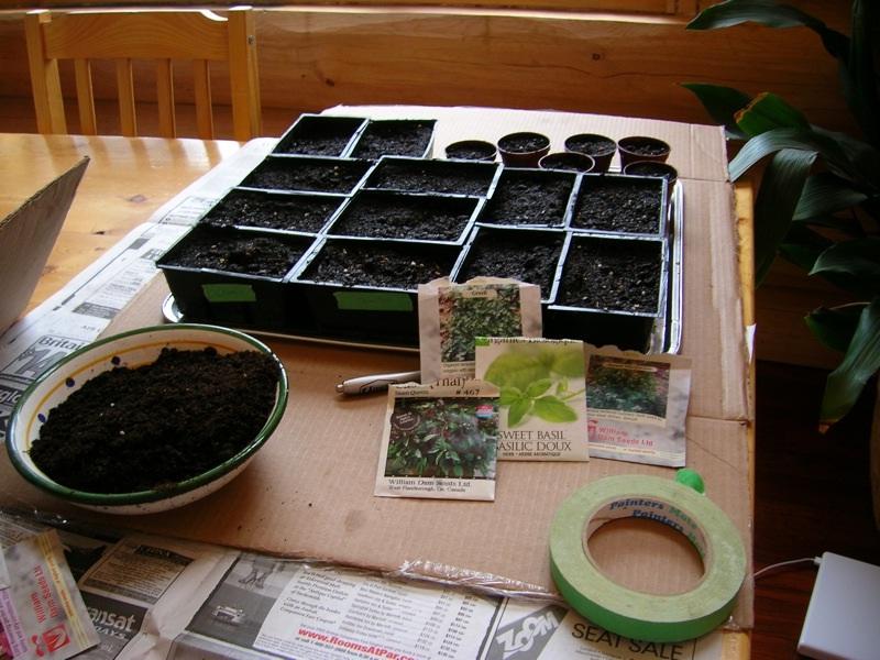 нолана выращивание из семян