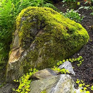 Камінь, вкритий мохом