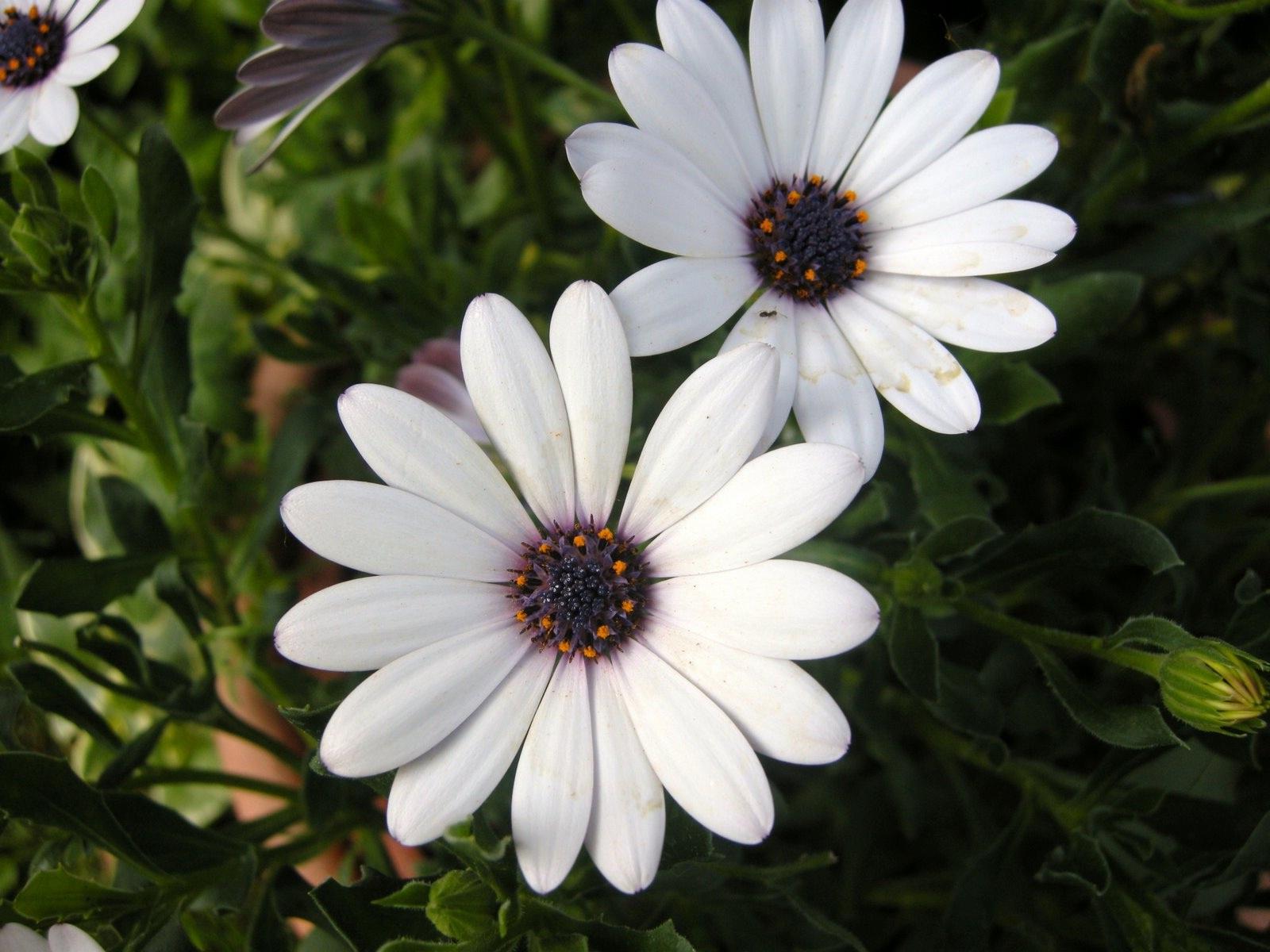 каталог садовых цветов  названия