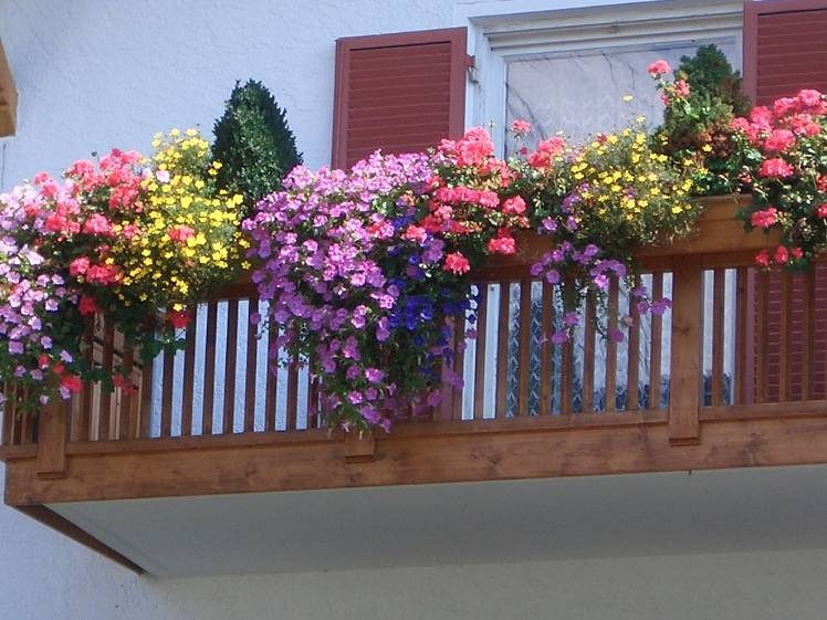 Цветы балконные