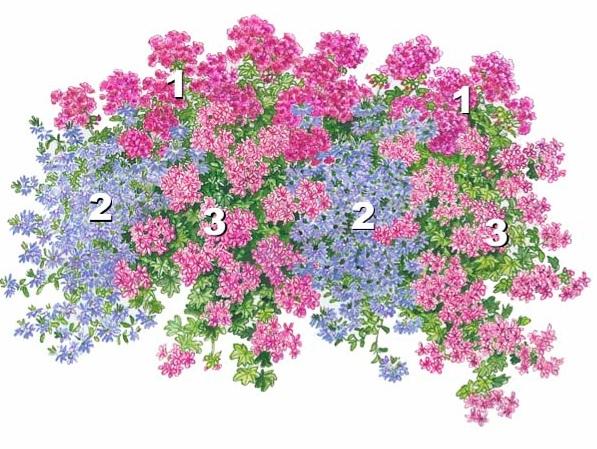 цветники | Записи в рубрике