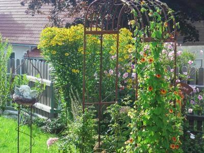 Вьющиеся однолетники для летнего сада