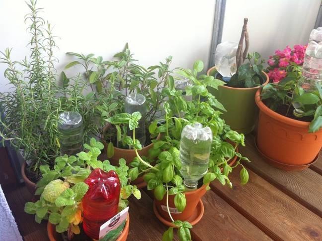Полив комнатные растений когда вы в