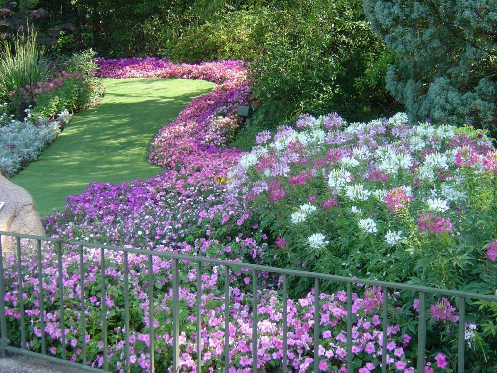 Цветущий сад без лишних затрат