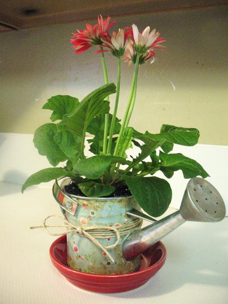 удобрение для комнатных растений форте отзывы