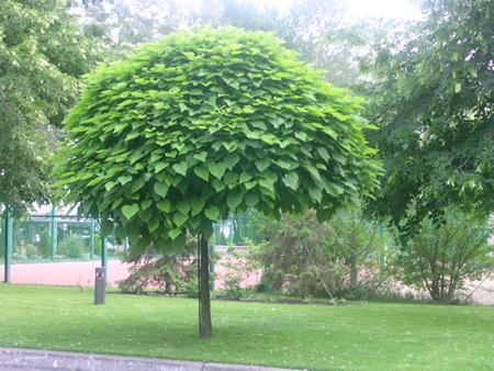 Деревья зонтики и деревья шары