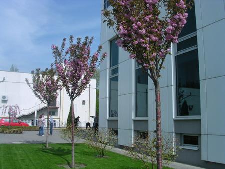 Красивоцветущие деревья