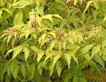 Под сенью ажурной листвы
